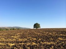 Campi dell'agricoltore, albero solo Fotografie Stock