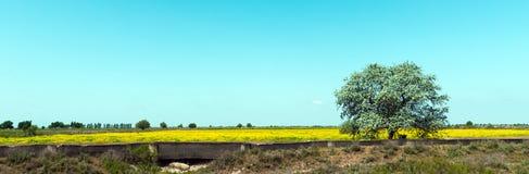 Campi dell'agricoltore, albero solo Immagine Stock Libera da Diritti
