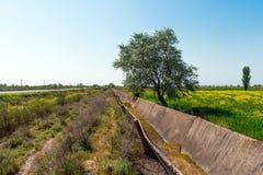 Campi dell'agricoltore, albero solo Fotografie Stock Libere da Diritti