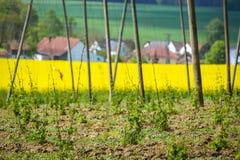 Campi della Baviera Immagine Stock Libera da Diritti