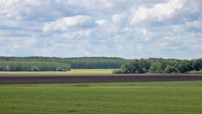 Campi della campagna di estate Paesaggio distante dei campi Immagine Stock