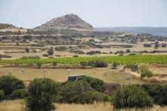 Campi della Cipro Fotografie Stock