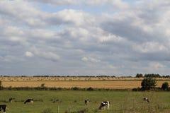 Campi della Normandia, Francia Fotografie Stock Libere da Diritti