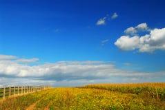 Campi della soia e del cereale Fotografie Stock