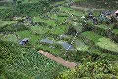 Campi della verdura degli altopiani di Cameron Fotografia Stock Libera da Diritti