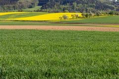 campi della violenza ed acro acricultural Immagini Stock