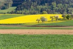 campi della violenza ed acro acricultural Fotografie Stock