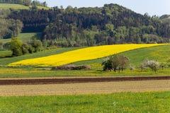 campi della violenza ed acro acricultural Fotografia Stock