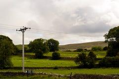 Campi delle pecore Fotografia Stock