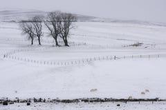 Campi dello Snowy Immagini Stock Libere da Diritti