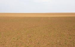Campi di agricoltura Fotografia Stock