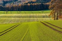 Campi di agricoltura in autunno Immagine Stock Libera da Diritti