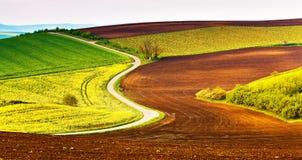 Campi di agricoltura e prati verdi e gialli immagini stock
