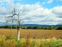 Campi di autunno Immagine Stock