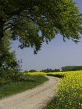 Campi di Canola della depressione del percorso Fotografia Stock