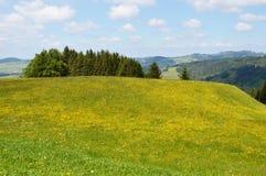 Campi di erba di Appenzell Fotografia Stock Libera da Diritti