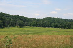 Campi di erba, foresta degli alberi Fotografie Stock