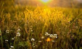 Campi di erba fumosi della baia di Cades delle montagne Fotografie Stock