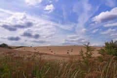 Campi di estate, Cambridgeshire Immagini Stock