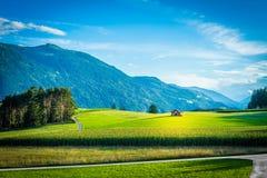 Campi di Fietch su Sonnenplateau, Austria Fotografie Stock Libere da Diritti