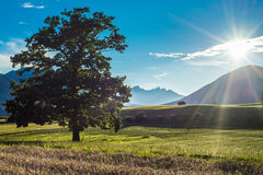 Campi di Fietch su Sonnenplateau, Austria Immagini Stock
