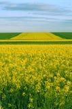 Campi di fioritura fotografie stock libere da diritti