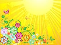 Campi di fioritura di estate illustrazione vettoriale