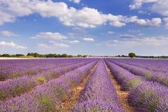 Campi di fioritura di lavanda in Provenza, Francia del sud Fotografia Stock Libera da Diritti