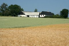 Campi di frumenti nell'azienda agricola Fotografia Stock