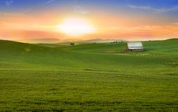Campi di frumento all'indicatore luminoso del sole di sera Immagine Stock Libera da Diritti