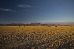 Campi di frumento dell'Idaho fotografie stock libere da diritti