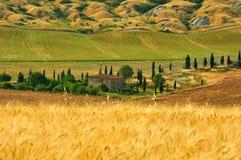 Campi di frumento in Toscana, Italia Immagini Stock Libere da Diritti