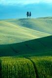 Campi di frumento verdi Fotografia Stock