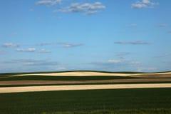 Campi di frumento verdi e raccolti Immagini Stock Libere da Diritti