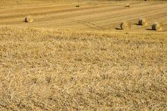 Campi di grano Immagini Stock Libere da Diritti