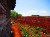 Campi di grano agricoli Fotografia Stock Libera da Diritti