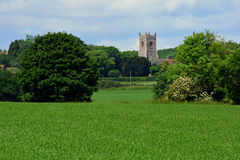 Campi di grano & chiesa, Shotesham, Norfolk, Inghilterra a giugno immagine stock libera da diritti