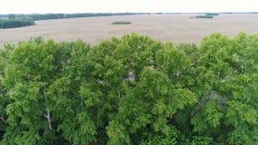 Campi di grano e degli alberi Bello paesaggio dall'altezza Fucilazione al fuco video d archivio