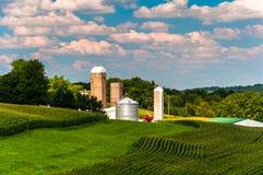 Campi di grano e silos su un'azienda agricola nella contea di York del sud, Pennsyl Immagini Stock Libere da Diritti