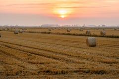 Campi di grano nella fine dell'estate, dopo la raccolta immagine stock