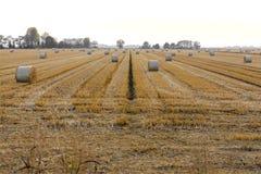 Campi di grano nella fine dell'estate, dopo la raccolta Fotografie Stock