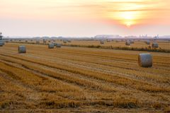 Campi di grano nella fine dell'estate, dopo la raccolta fotografie stock libere da diritti