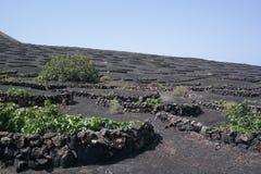 Campi di grapewine di Yaisa, Lanzarote, isole di canaria Fotografia Stock Libera da Diritti