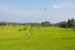 Campi di risaia Fotografia Stock Libera da Diritti