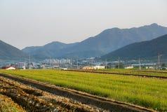 Campi di risaia nell'area urbana della Corea del Sud con la città ed il mou Immagini Stock