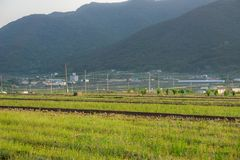 Campi di risaia nell'area urbana della Corea del Sud con la città ed il mou Immagini Stock Libere da Diritti