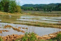 Campi di risaia vicino alla pianura del sito archeologico dei barattoli I campi celano il pericolo nascosto Fotografia Stock Libera da Diritti