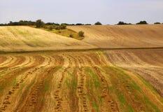 Campi di rotolamento della Moravia, repubblica Ceca Bello paesaggio Belle terre di estate immagine stock libera da diritti