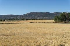 Campi di stoppie in un paesaggio agricolo Immagini Stock