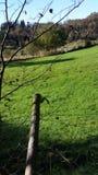 Campi di verde vicino alla montagna Fotografia Stock